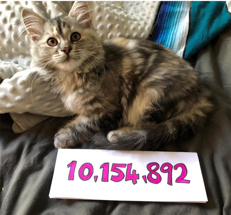The Chinese Room's Office Manager Zoe Osborne's kitten, Wanda, proudly displaying the total.